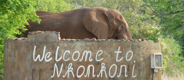 nkonkoni fishing camp, wildlife reserve, pongola, self catering, fishing, kwazulu-natal, accommodation, wildlife accommodation, camping